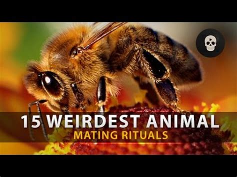 8 Strange Animal Mating Rituals by Clip Hay 4 Ways Animals Uwbegrd6mg8