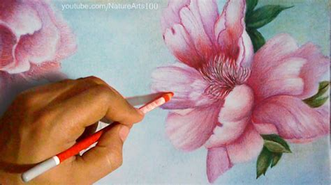 colored time drawing roses polychromos colored pencils time lapse