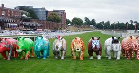 rhino mania launches at chester racecourse chester chronicle