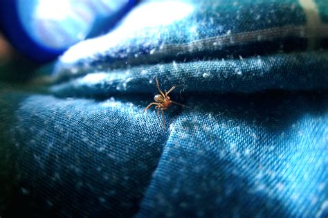 spider in my bed spider on my bed by bucaralook on deviantart