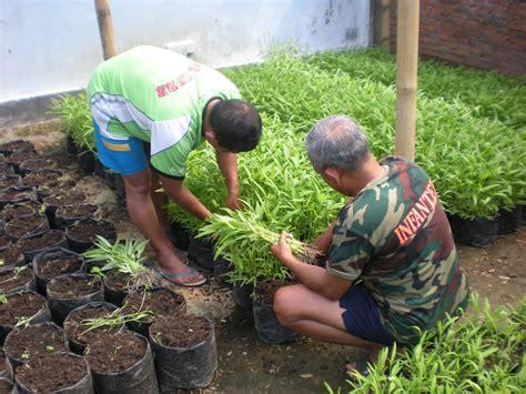 teknik budidaya sayur organik petani organik sripurwanto443