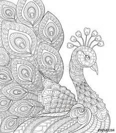 peacock coloring pages for adults vektor peacock antistress coloring page black and