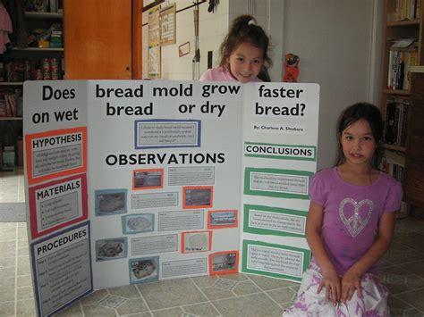 mold bread experiment   mold grow