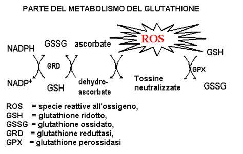 alimenti ricchi di glutatione glutatione tutte le informazioni