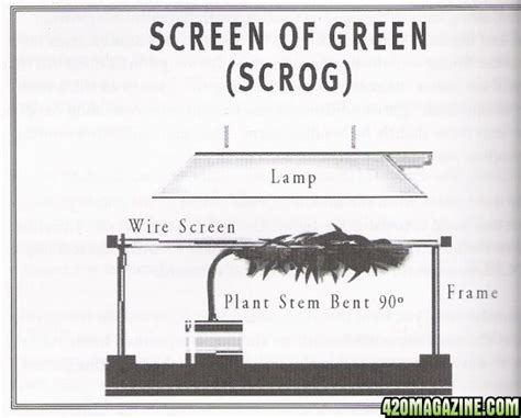 Grow Room Plans by Grow Room Design Support