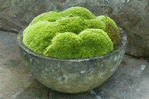 Moss Planters moss covered rock container planters 2