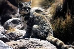 The 7 endemic patagonia animals on the decline patagonia travel blog