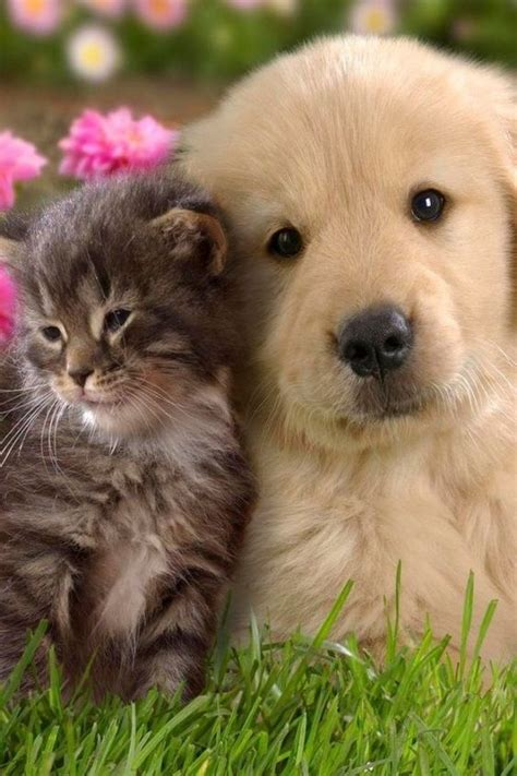 cat and puppy world images of cats and dogs www imgkid the image kid has it