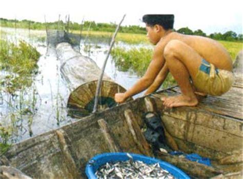 Mesin Giling Ikan Asin ikan hias foto budidaya ikan wader