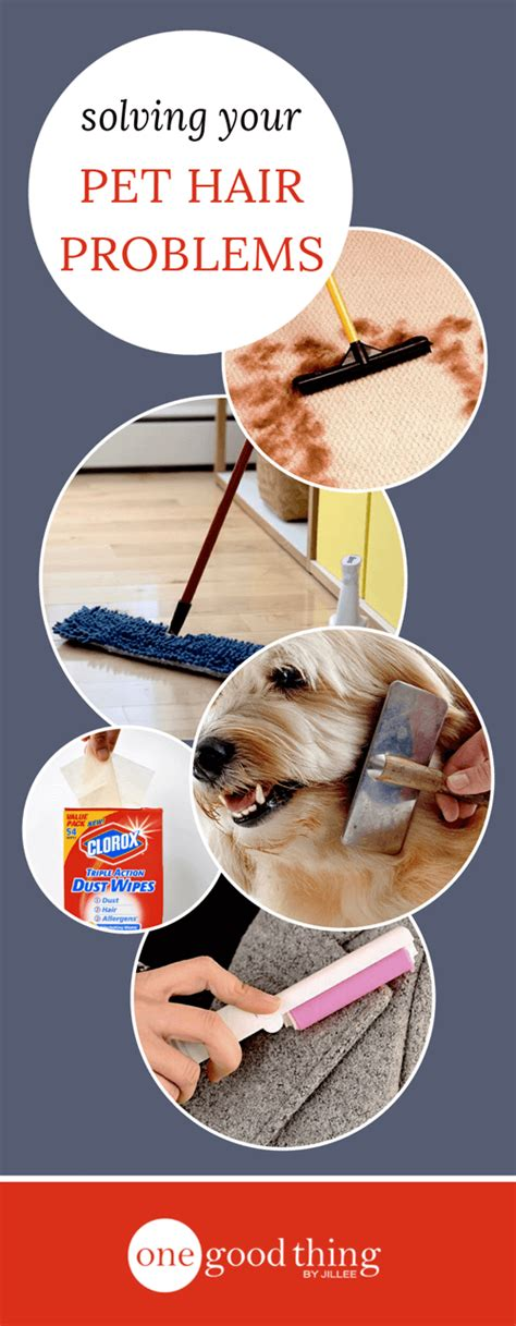 best way to remove pet hair from couch how to easily remove pet hair from every surface in your