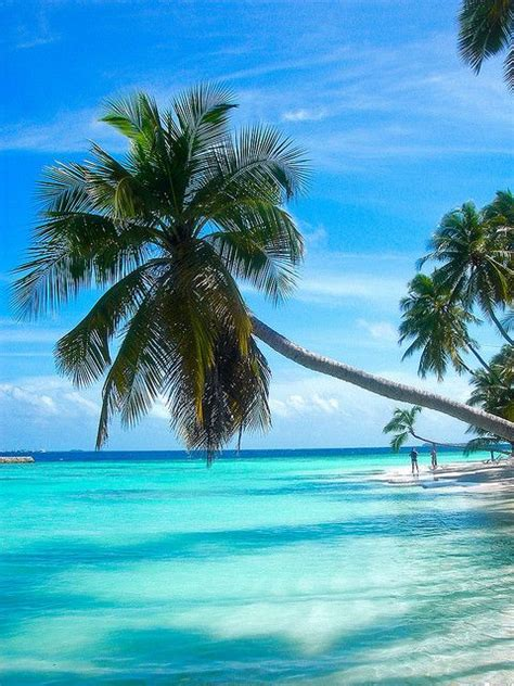 tropical island paradise paradise island maldives travel destinations pinterest