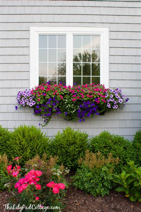 window box flower designs window boxes archives the lilypad cottage