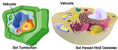 perbedaan gambar format jpeg dan png perbedaan vakuola makanan dan vakuola kontraktil hedi