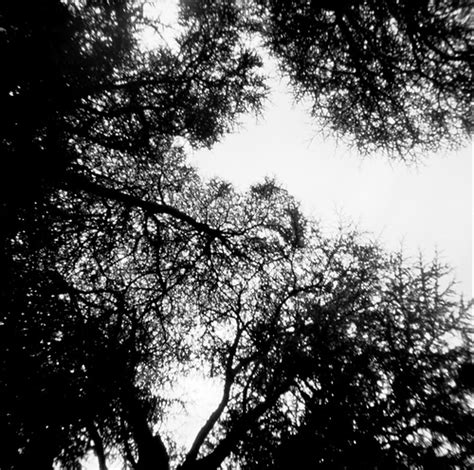Tree Canopy Definition by Tree Canopy These Images Were Scanned From Prints Not