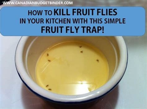 how to kill fruit flies in house how to kill fruit flies fast with this simple fruit fly trap the grocery game