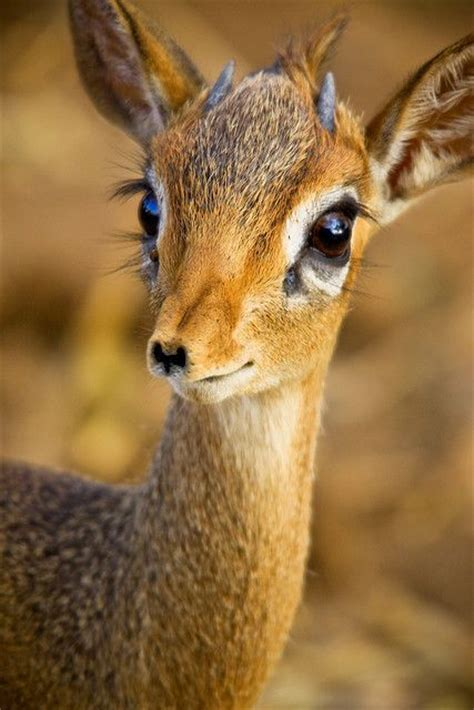 cute baby deer pictures   images  facebook tumblr pinterest  twitter