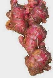 manfaat jahe merah  pengobatan tanaman obat