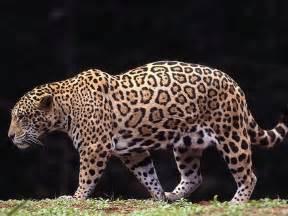 Santa Jaguar Casa Jaguar Santa Marta Casajaguarsantamarta S