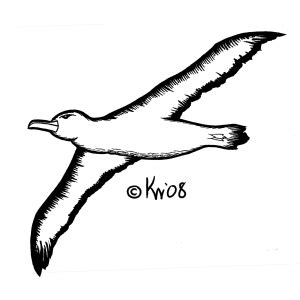 wezwick portfolio albatross tattoo design
