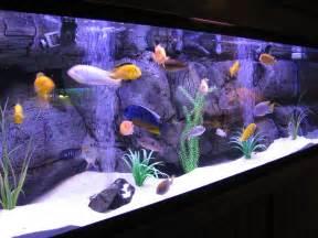 Aquarium Design Ideas by Aquaec Tropical Fish