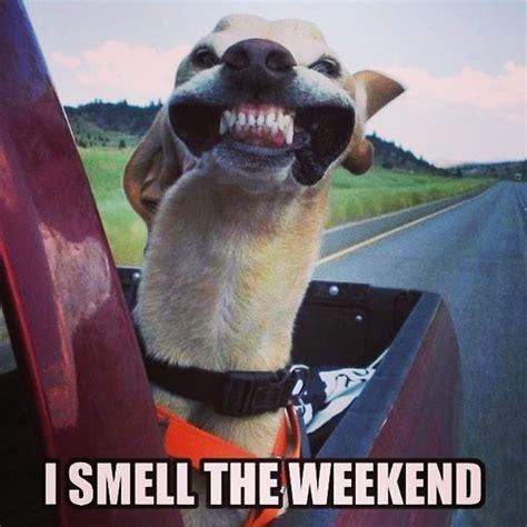 Weekend Dog Meme - dog weekend meme www imgkid com the image kid has it