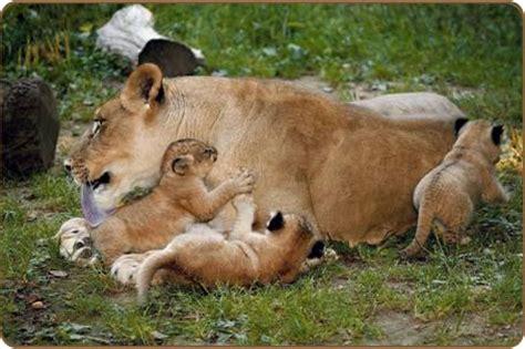 imagenes otoñales con animales sab 237 as que algunos animales se comunican mediante los