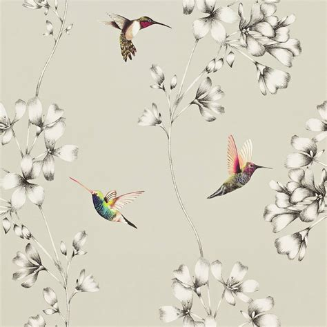 wallpaper hummingbird design style library the premier destination for stylish and