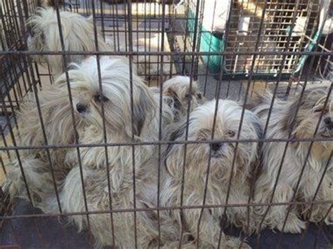 mlive puppies puppy mills pet adoption and euthanasia discussed in michigan senate mlive