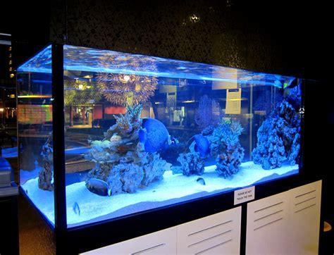 aquarium design delhi design build marine freshwater aquarium 10 years