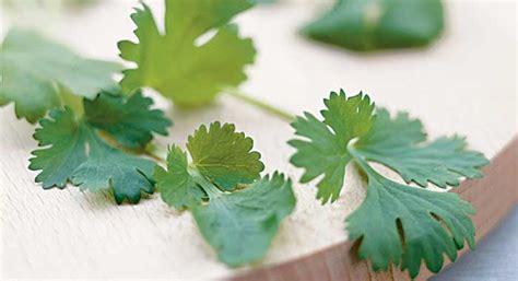 Daun Bambu Lung Fresh parsley food