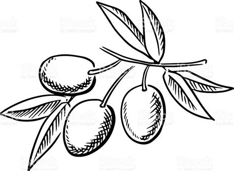 olive clipart olive clipart black and white letters