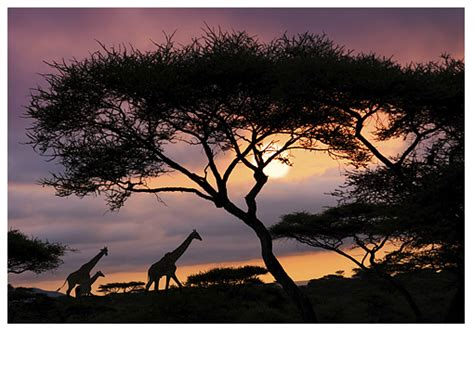 wallpaper for walls south africa photo wall mural african safari 400x280 wallpaper wall art