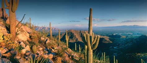 Living Outdoors by Dove Mountain Sonoran Spectacle Amp Serenity Tucson