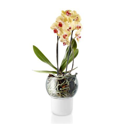vasi orchidee orchid pot ambientedirect