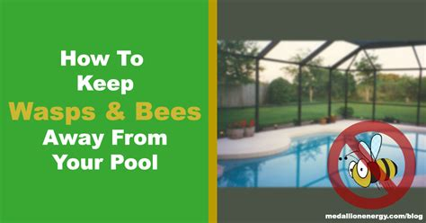 how to keep wasps away from house 9 ways to keep wasps and bees away from your swimming pool