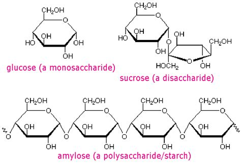 carbohydrates chain this an exle of carbohydrates polymer macromolecules