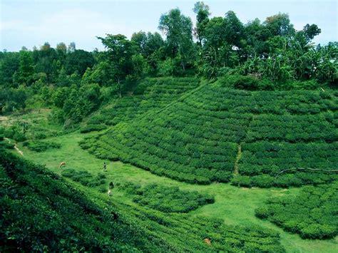 wallpaper natural beauty  bangladesh