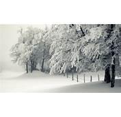 Snowy Trees Winter  HD Desktop Wallpapers 4k
