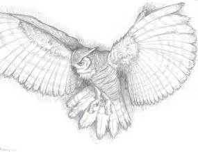 Drawings pin owl pencil drawing picture to pinterest drawing amp art