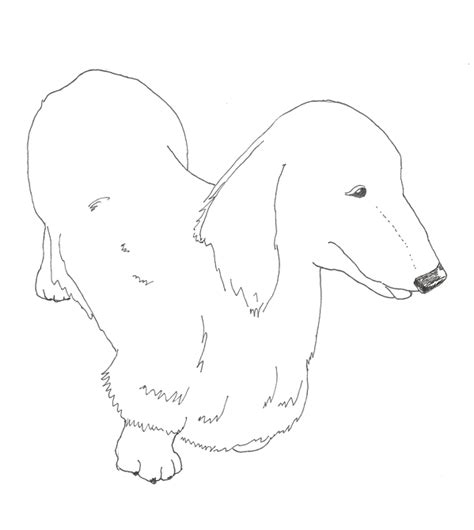 dachshund puppies coloring pages dachshund coloring pages