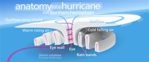 diagram of a cyclone typhoons hurricanes and cyclones eniscuola