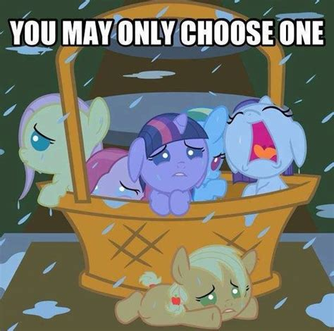 Mlp Rainbow Dash Meme - i choose fluttershy and baskets on pinterest