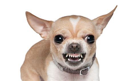 Lespakket honden • Petfood Magazine