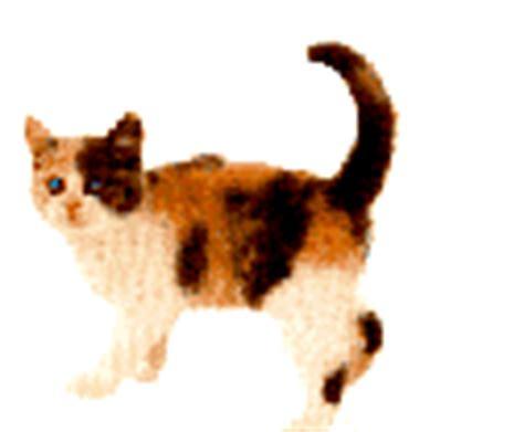 format gif png ou jpeg animation gif chat image chat blanc ou noir