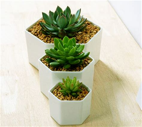 tiny potted plants great idea for small plants simple hexagon ceramic flower