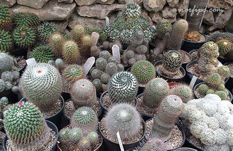 Rosas De Jardin #8: Vivero-loteria-exposicion-venta-cactus.jpeg