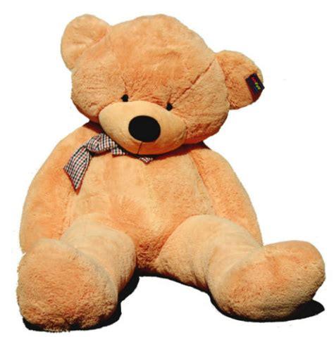 big teddy teddy images usseek