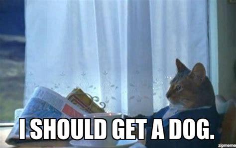 Cat Meme I Should Buy A Boat - i should buy a boat cat meme i should get a dog