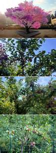 hybrid fruit tree hybrid tree can grow 40 kinds of fruit is called the