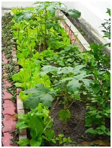 start a vegetable garden veggie patch raised bed garden